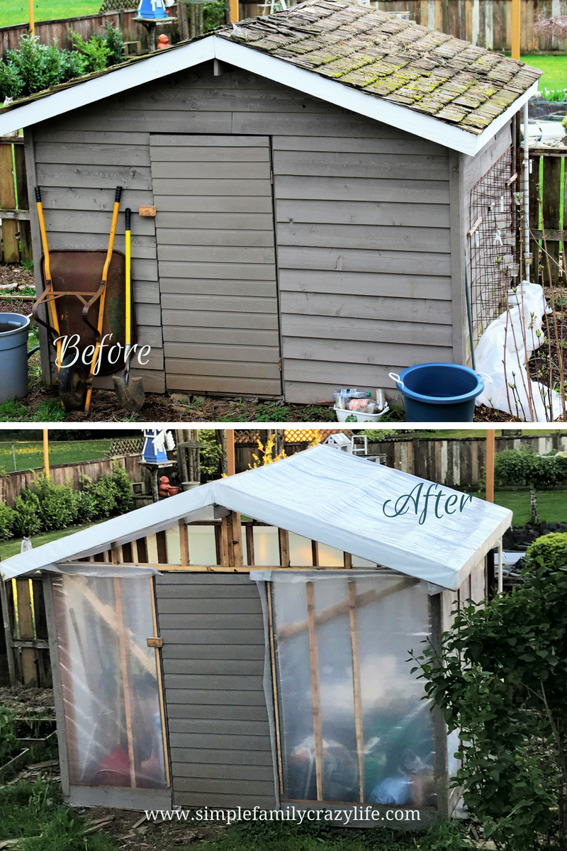 shed to greenhouse transformation