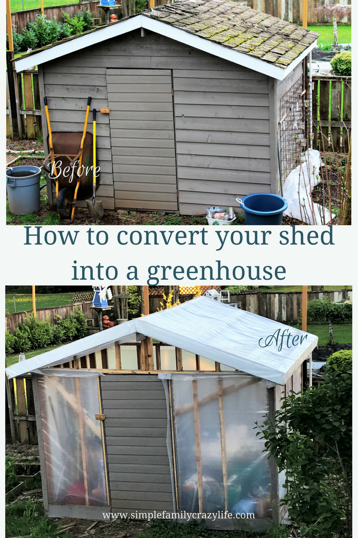 shed into greenhouse conversion
