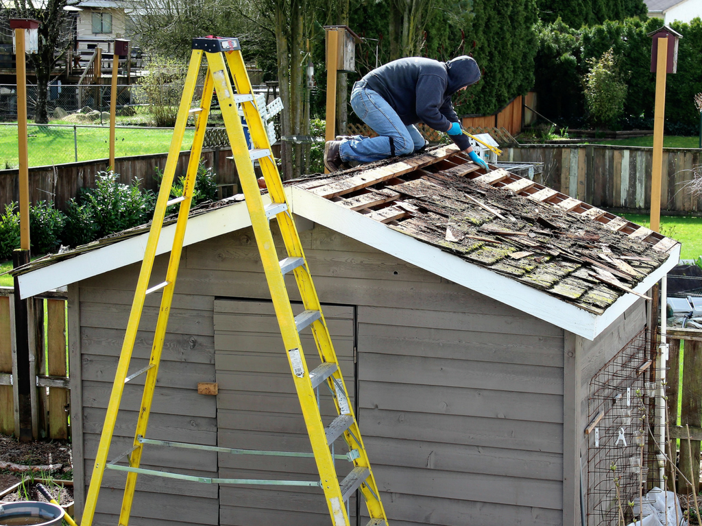 greenhouse to shed conversion