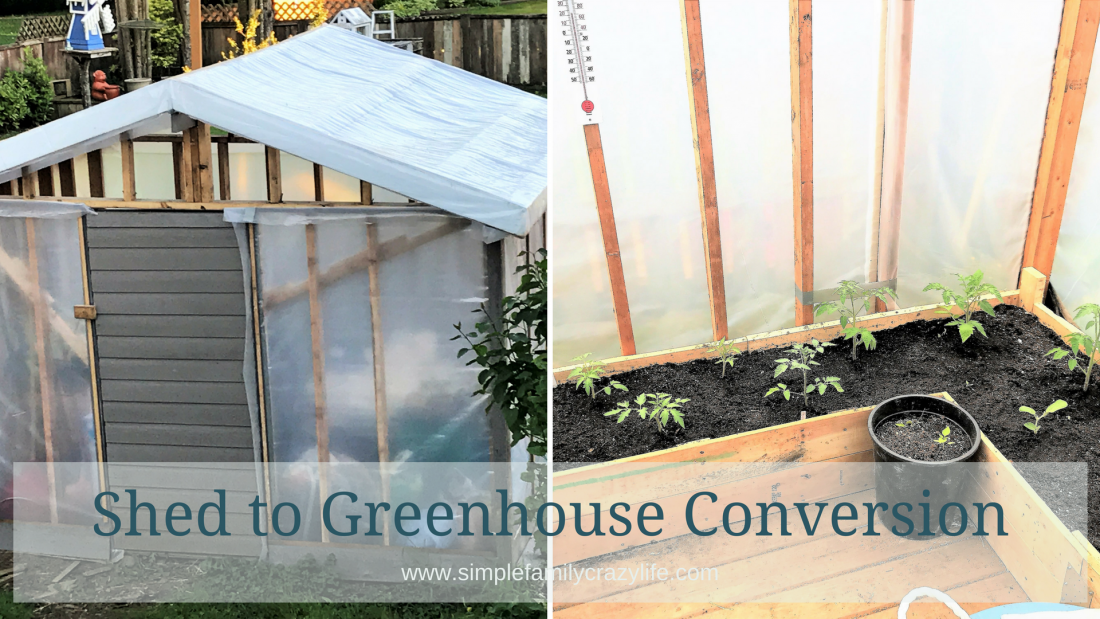 shed to greenhouse