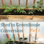 Shed to Greenhouse Conversion – Part 2