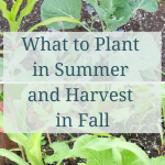 Summer Planting for Fall Harvest