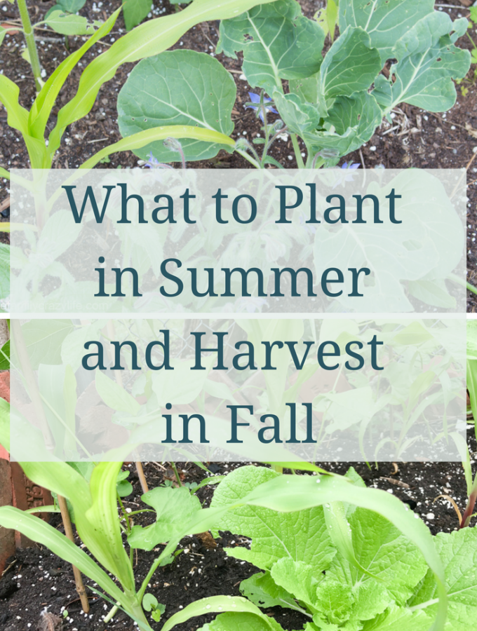 Gardening in Zone 8 Canada July Update and Planting for Fall Harvest