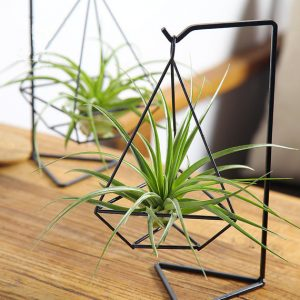 Air Plants Inspiration and Resources