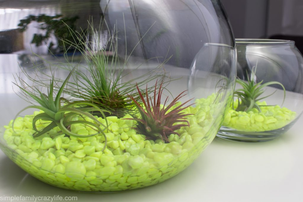 Air Plants Resources and Inspiration