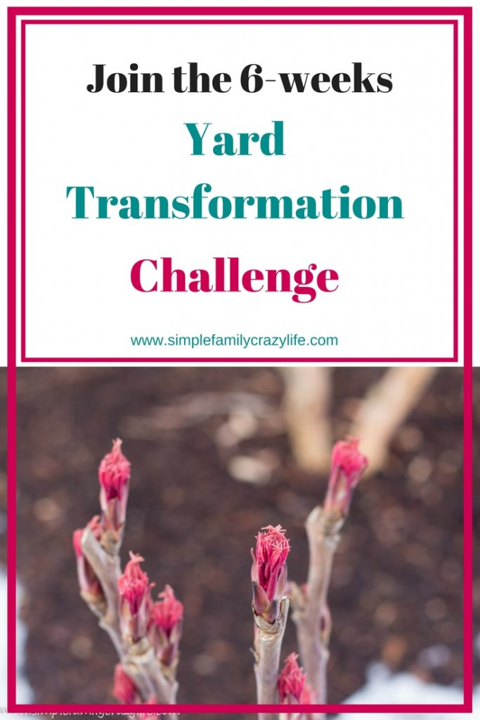 Join the Front Yard Transformation Challenge