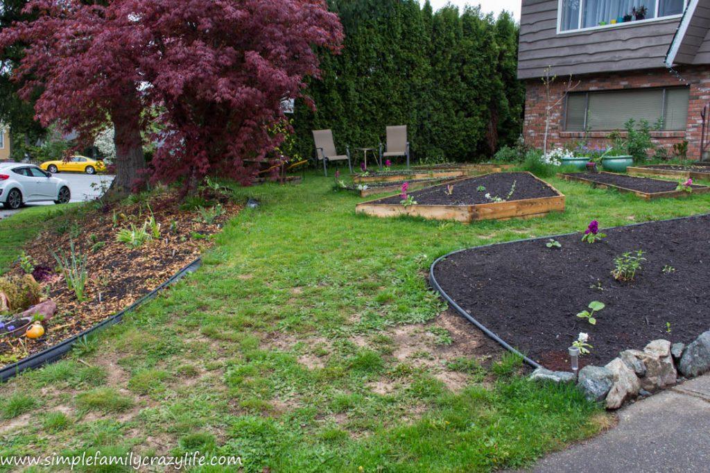 Yard Transformation Challenge - front yard makeover