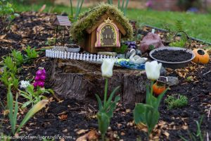 Yard Transformation Challenge – Reveal