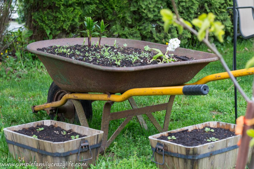 Yard Transformation Challenge - front yard makeover - wheelbarrow planting