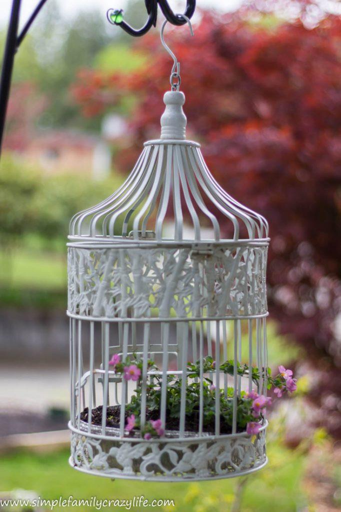 Yard Transformation Challenge - front yard makeover - bird cage garden decor