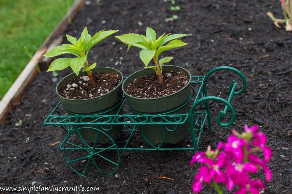 Yard Transformation Challenge - front yard makeover - little wheelbarrow garden decor