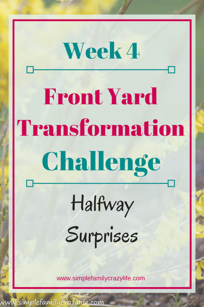 Yard Transformation Challenge - week 4. Design your own tranquil place. DIY
