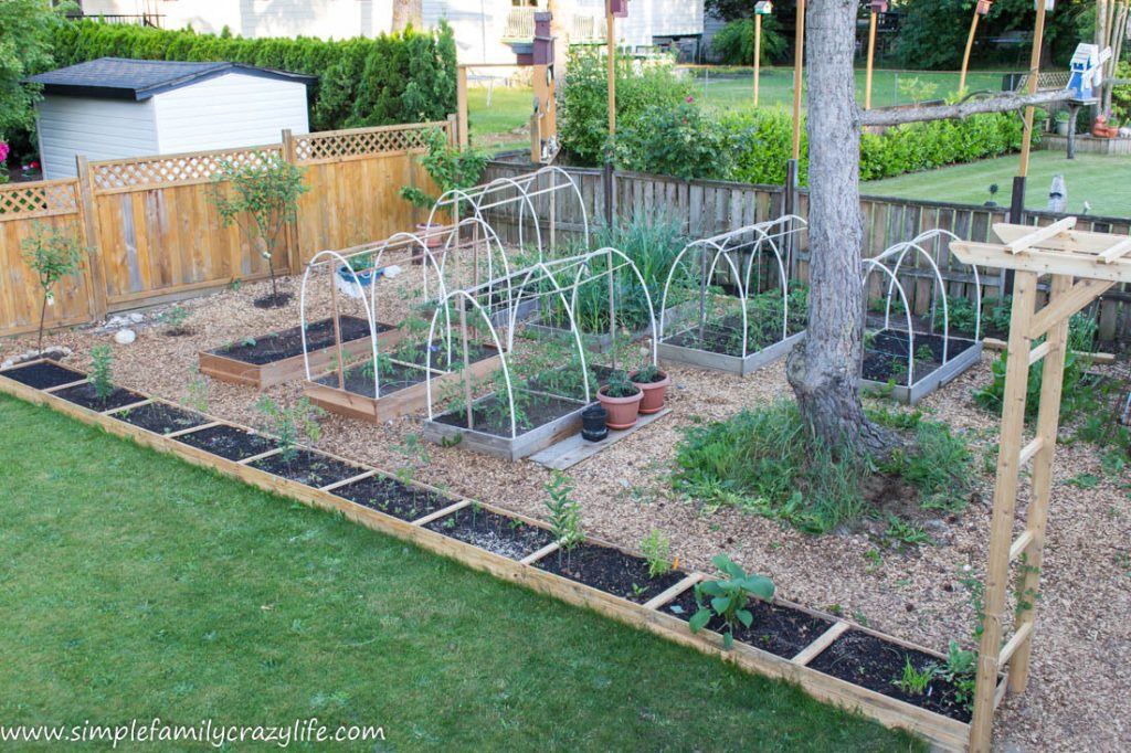 Yard Transformation Challenge Spring 2018 - backyard vegetable garden transformation - yard transformation challenge reveal