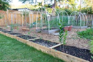 Backyard Garden – Yard Transformation Challenge Reveal