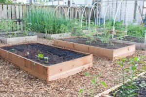 Backyard Vegetable Garden Transformation – YTC Week 5