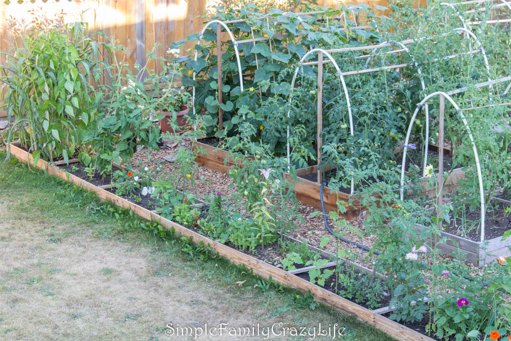 How to start an organic garden - raised garden beds