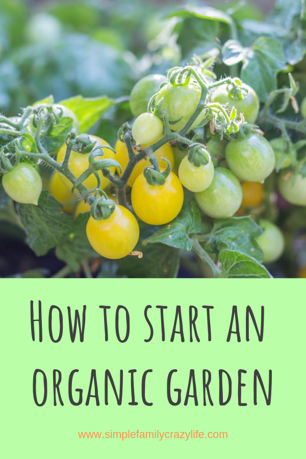How to start an earth-friendly, organic garden