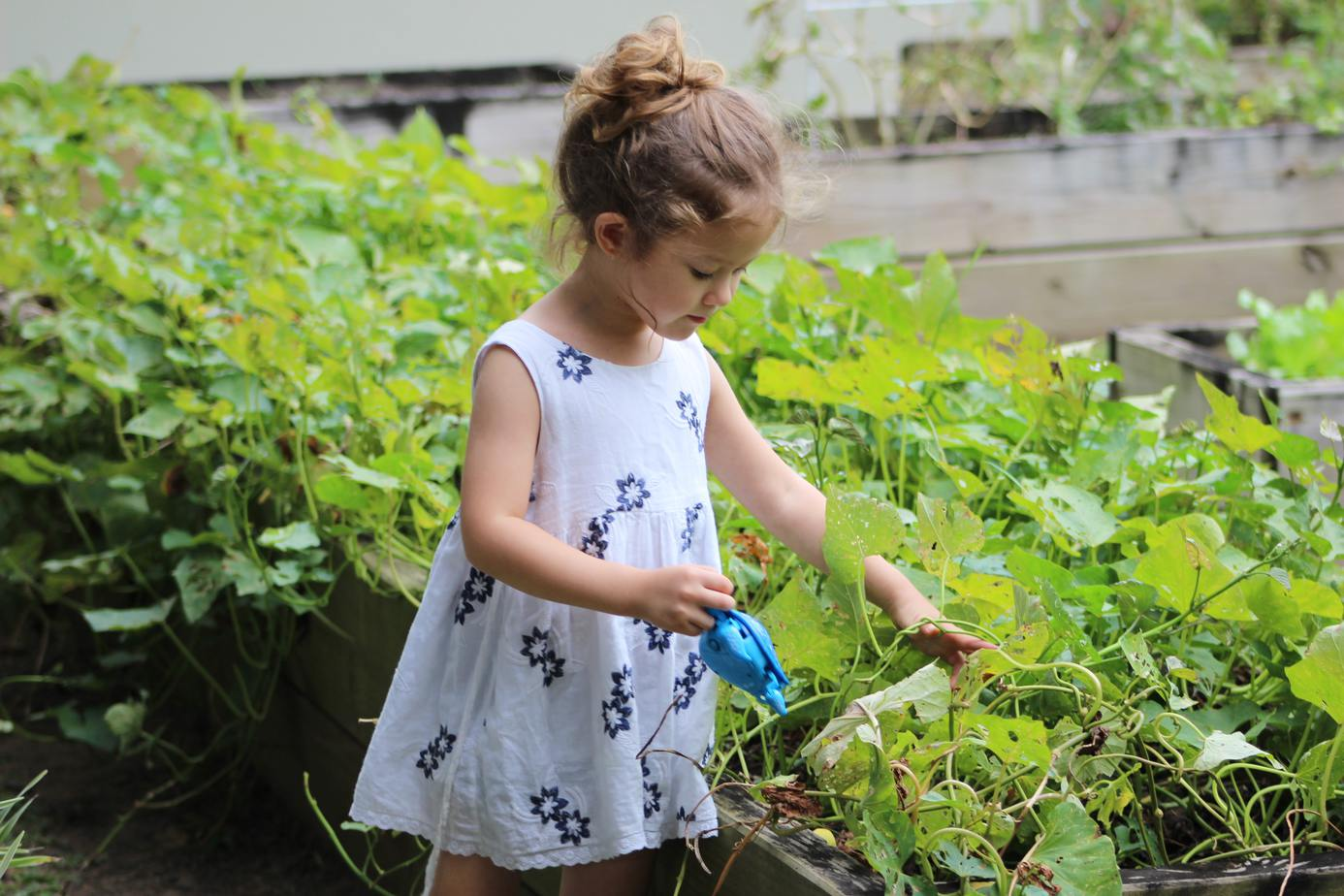 Gardening with Kids - how to get your kids help you in the garden - squash plant